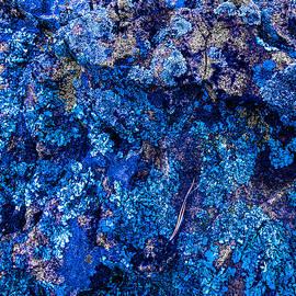 Blue Hue Moss by Austin Davis