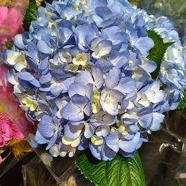 Blue Hydrangea Ball by Charlotte Gray