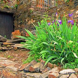 Blue Iris in Patones by Nieves Nitta