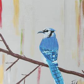 Blue Jay by Jennifer Long