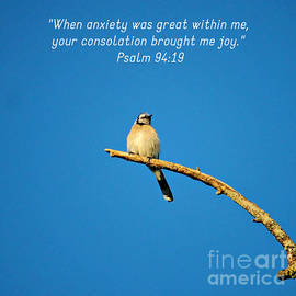 Blue jay with Psalm by Christine Ledford