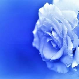 Blue mood by Cozma Mihaela
