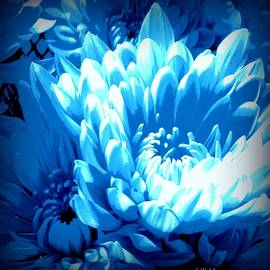 Blue Mums Aglow by VIVA Anderson