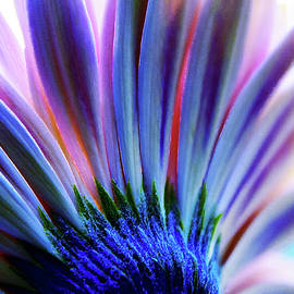 Blue Pink Daisy by Terry Davis