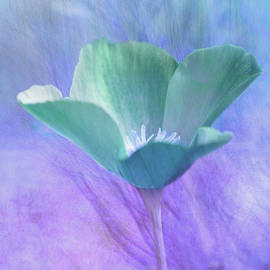 Blue Poppy by Terry Davis