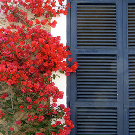 Blue Shutters and Bouganvillea  by Carla Parris