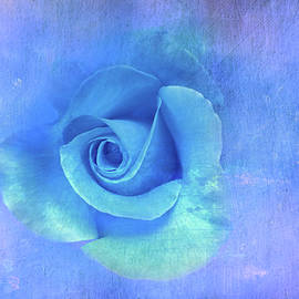 Blue Textured Rose by Terry Davis