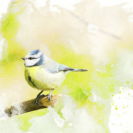 Blue Tit - Watercolour by Darren Wilkes