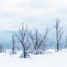 Blue Winter Scene - Desolate Forest by Patti Deters