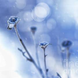 Blue Winter by Susan Warren