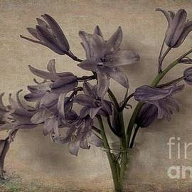 Bluebells in Grunge by Luther Fine Art