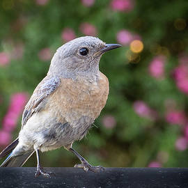 Bluebird among the Roses by Jean Noren