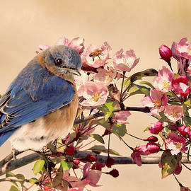 Bluebird, Bee, and Blooms in vintage by Carmen Macuga