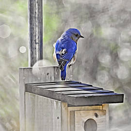 Bluebird claiming house in paint by Carmen Macuga