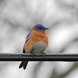 Bluebird on a Wire by Carmen Macuga