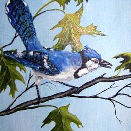 Bluejay by Deborah Strategier