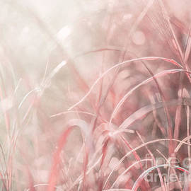 Blurring in Backlight by Hal Halli