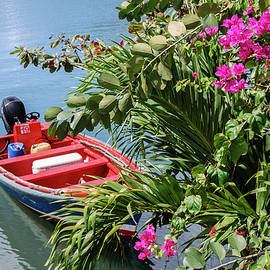 Boat Under Bougainvillea Bush by Andrew Wilson