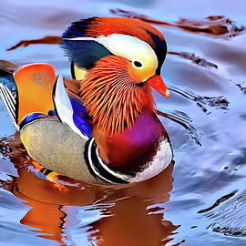 Bobble head mandarin duck by Geraldine Scull