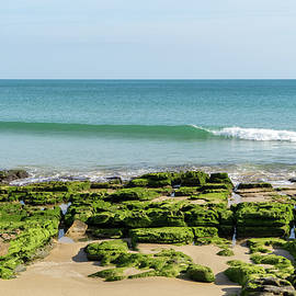 Bold Green Seaweed - Low Tide at Praia da Luz Gold Coast Algarve Portugal by Georgia Mizuleva