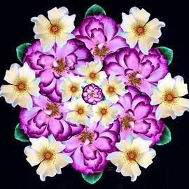 Bold Rose Mandala by Teresa Wilson