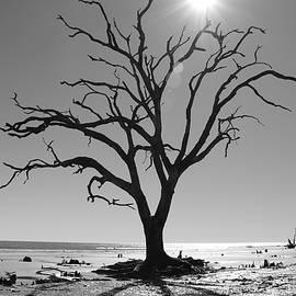 Boneyard Beach - Botany Bay Plantation by Matt Richardson