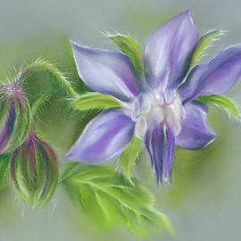 Borage Flower and Buds by MM Anderson