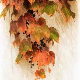 Boston Ivy by Marcia Lee Jones