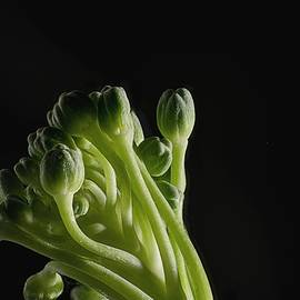 Boudoir Broccoli  by Scott Zempel