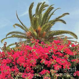 Bougainvillea and Palm by the Big Bay by Barbie Corbett-Newmin