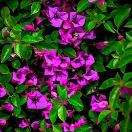 Bougainvillea Floral Print