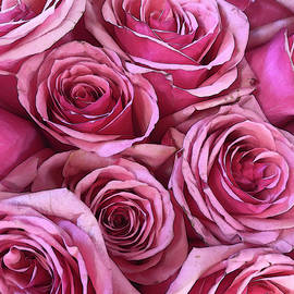 Bouquet of Pink Roses Stylized by Maria Keady