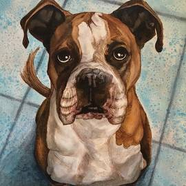 Boxer by Shari Grinnell