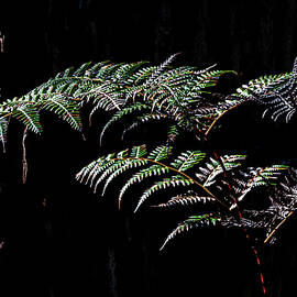 Bracken By Marri by Hugh Warren