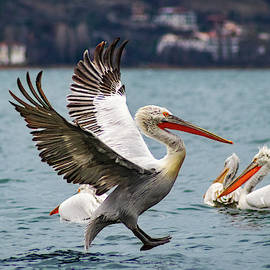 Brakes On For Landing by IC Papachristos