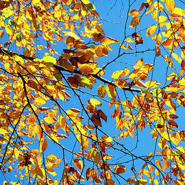Branches Against the Sky by Debra and Dave Vanderlaan