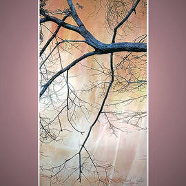 Branching Down by Rene Crystal
