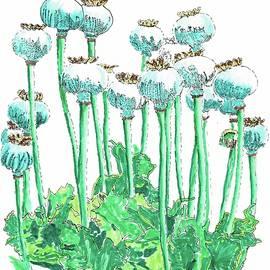 Breadseed poppy by Randy Barkley