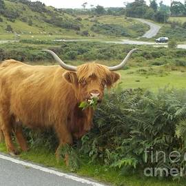 Breakfast For A Dartmoor Cow by Lesley Evered