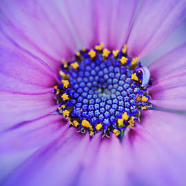 Bright and Colorful Daisy by Terry Davis