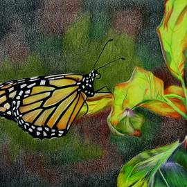 Bright Butterfly by Jenny Andreoli