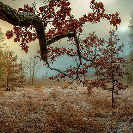 Bright colors awarded us the last autumn day in the clearing of the forest by Igor Klyakhin