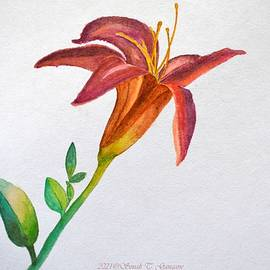 Bright Daylily by Sonali Gangane