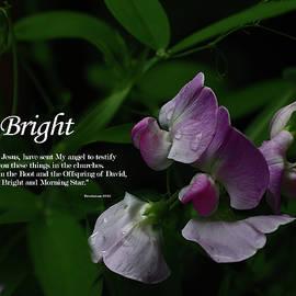 Bright by Dennis Burton