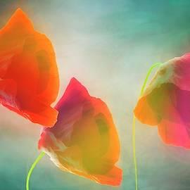 Bright dream by larisa Fedotova