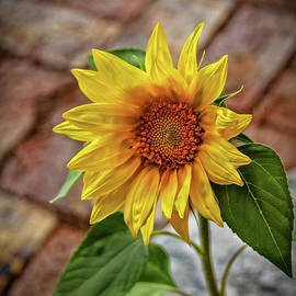 Bright Sunflower by Robert Bales