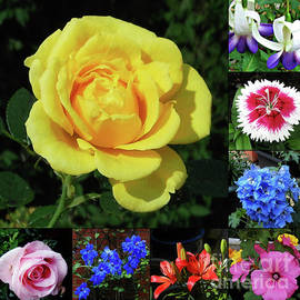 Brilliant Summer Flowers Collage by Kathryn Jones