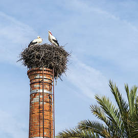 Bringing Babies - White Storks Nesting on a Tall Brick Chimney Above the Treetops by Georgia Mizuleva
