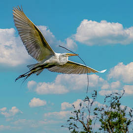 Bringing the Stick Back to Nest by TJ Baccari