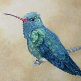 Broad Billed Hummingbird by Miriam Wilson